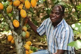Les autorité insistent sur la qualité du cacao auprès des producteurs